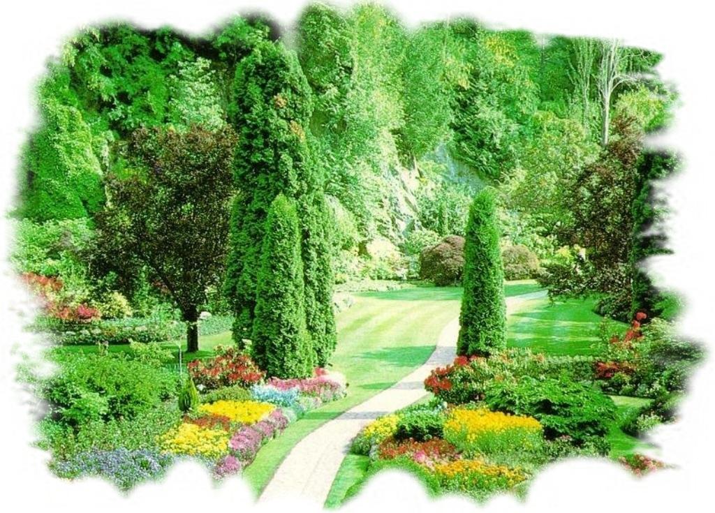 Piante da esterno for Piante ornamentali per esterno